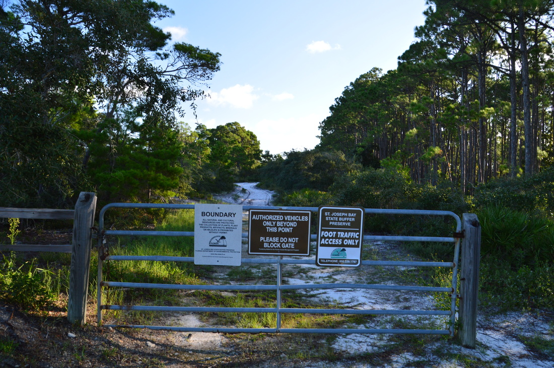 St joseph bay state buffer preserve deal tract trails old pine videos publicscrutiny Gallery